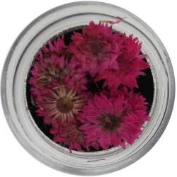 Fiori Secchi Colorati - NATURAL DRIED FLOWER - 5523-427