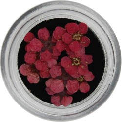 Fiori Secchi Colorati - NATURAL DRIED FLOWER - 5523-407