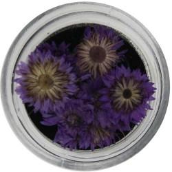 Fiori Secchi Colorati - NATURAL DRIED FLOWER - 5523-424